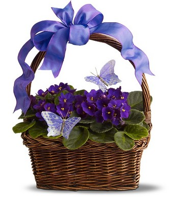 Violets and Butterflies from Ashland Florist in Lexington, KY