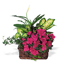 Azalea Attraction Garden Basket from Ashland Florist in Lexington, KY