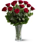 A Dozen Red Roses from Ashland Florist in Lexington, KY