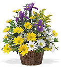 Smiling Spring Basket from Ashland Florist in Lexington, KY
